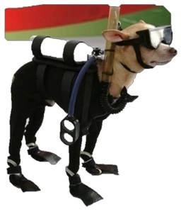 a small dog in scuba gear