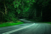 small road through green forest of trees