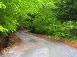 narrow road through woods