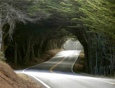 paved road through trees