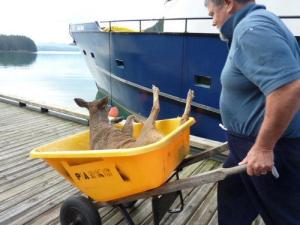 little deer in wheelborrow