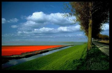 Tulip Fields15