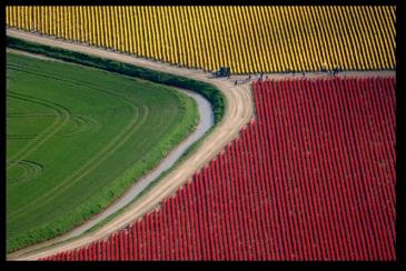 Tulip Fields5