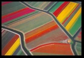 Tulip Fields7