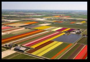 Tulip Fields8