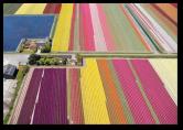 Tulip Fields9